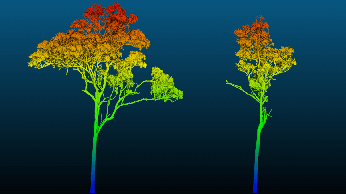 Tree-d modelling: scanning the savanna with 3d imaging