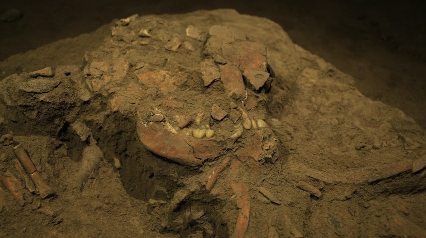 First ancient human dna from the gateway between asia and australia