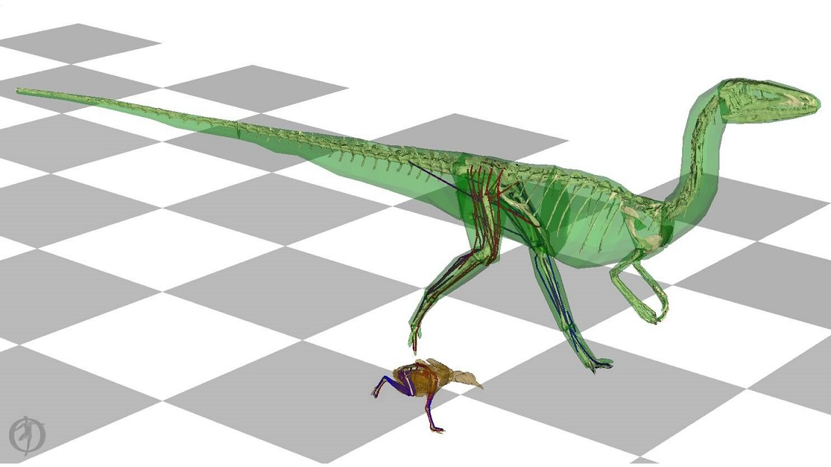 Forget about dogs: dinosaurs wagged their tails too