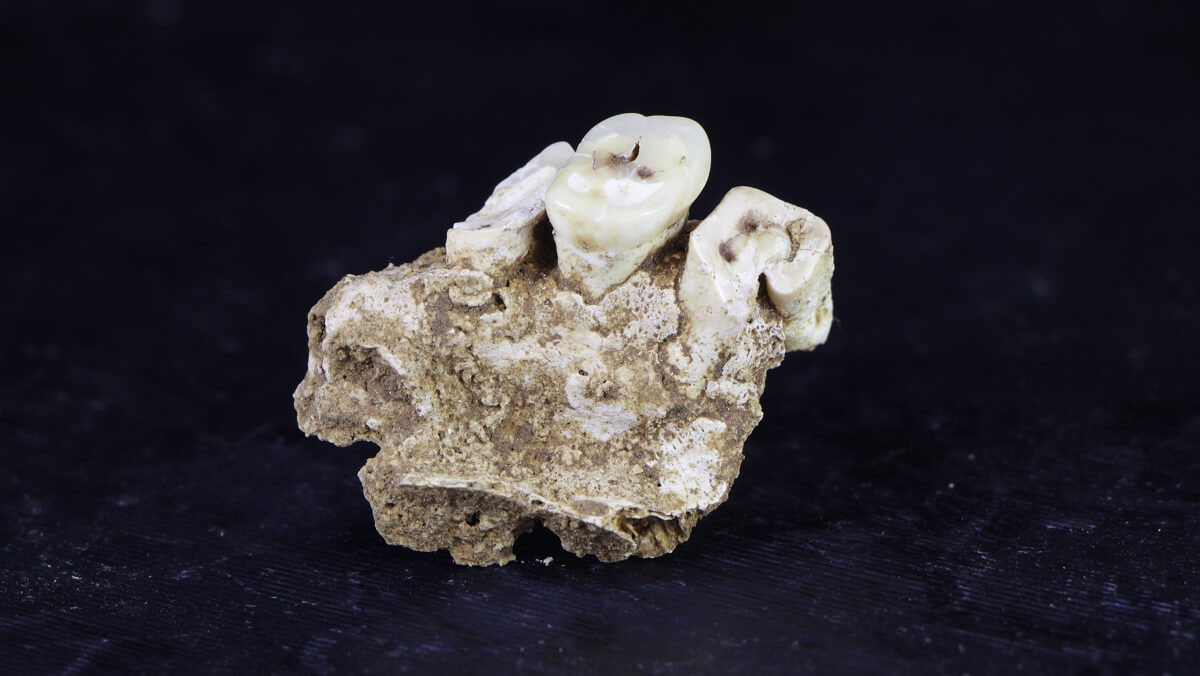 Decoding the secrets of a forgotten human history during the pleistocene