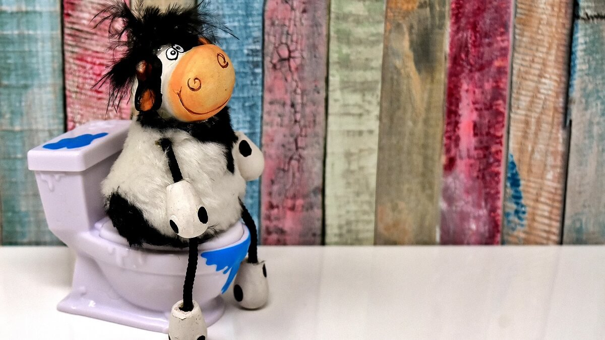 The new solution to climate change: potty-training cows