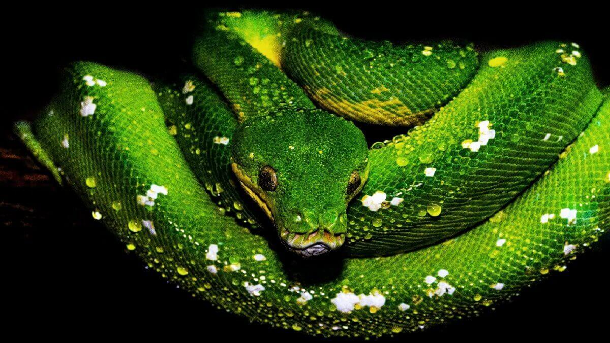 Snakes dined out after dinosaurs died out