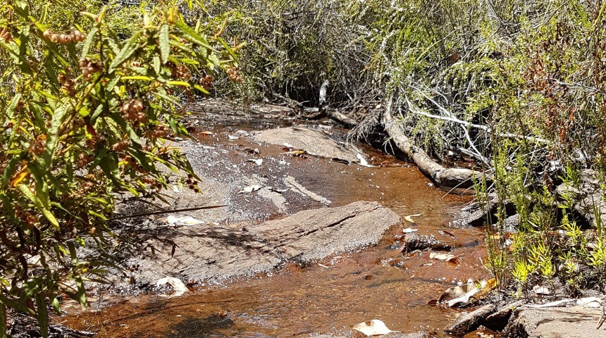 Declining rainfall threatens vulnerable stream species in wa's south-west
