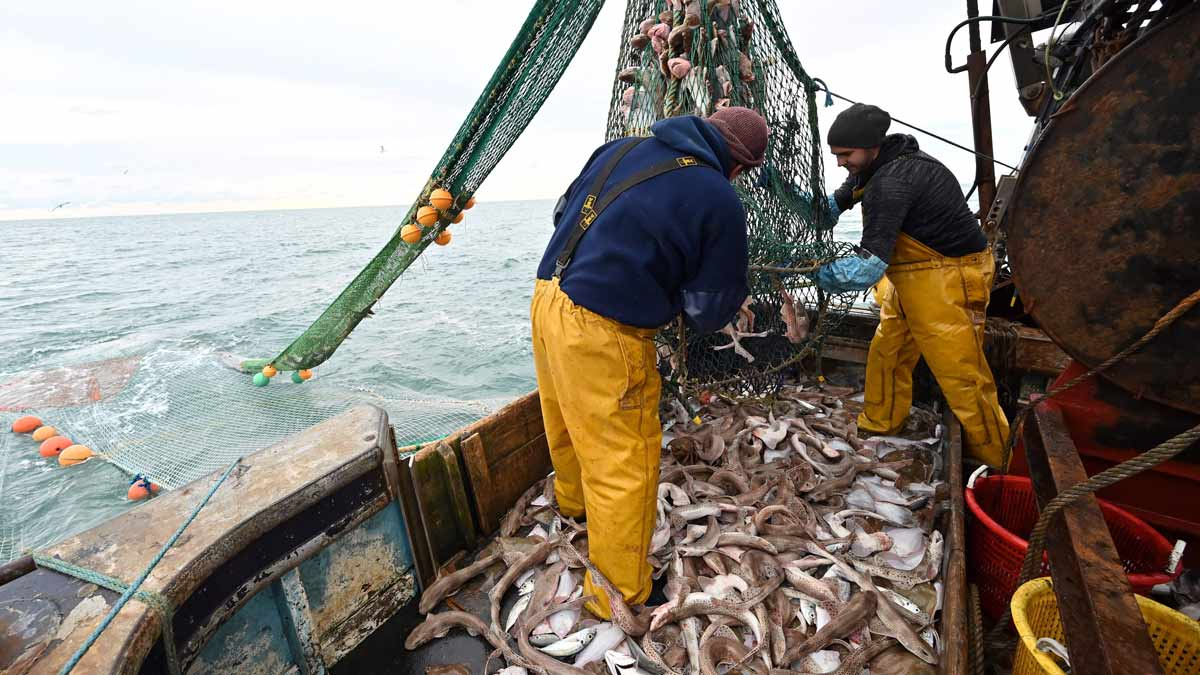 Catching fishy imports to tackle seafood fraud