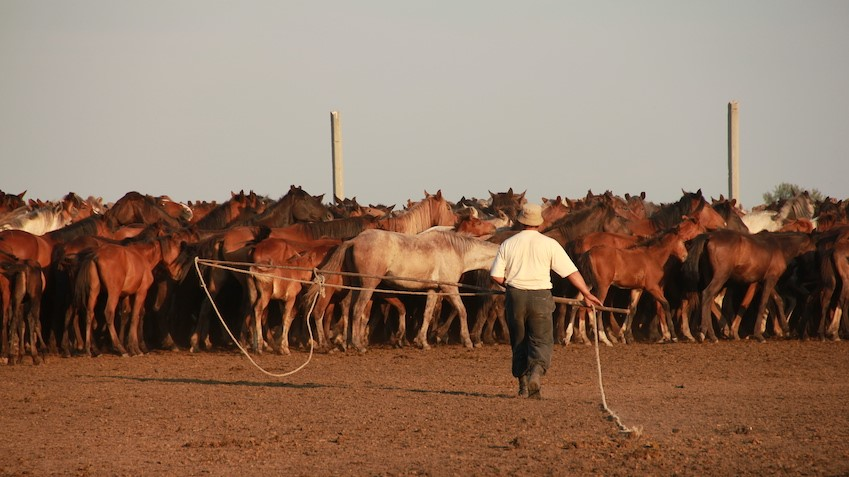 Giddy-up: origins of the domestic horse uncovered